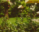 Winterfest machen: Gartenarbeiten im Herbst