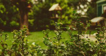 Individuelle Gartengestaltung mit Pfiff