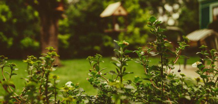 Tipps rund um den Gartenbrunnen
