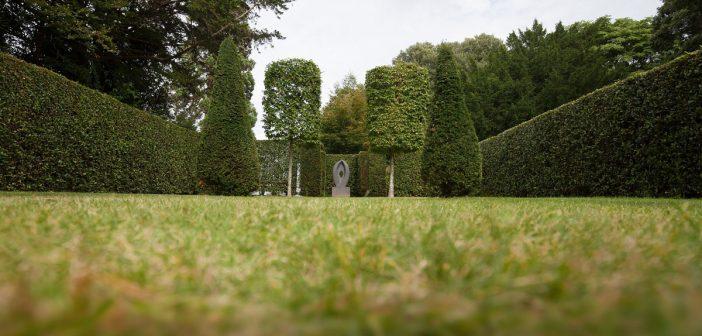 Thuja Smaragd im Garten